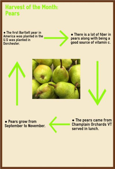 pear infographic